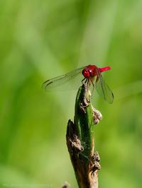 赤いヤツ - M2_pictlog