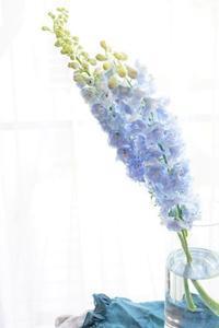 デルフィニウムの思い出 - お花に囲まれて