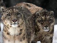 懐かしの動物たち(13)ゴルビーとプリン - 動物園放浪記