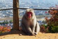 嵐山のサル - Taro's Photo