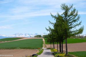 マイルドセブンの丘の山並みと木々~5月の美瑛 -