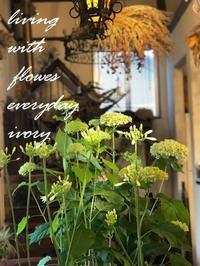 ◉雪boloさんのパンは6月28日(日) -  Flower and cafe 花空間 ivory (アイボリー)