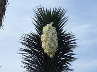 珍しい野生の「サツキ」 - 手柄山温室植物園ブログ 『山の上から花だより』