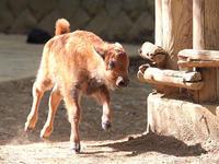 動物の赤ちゃんはよく走る - 動物園放浪記