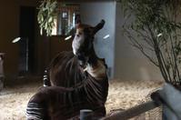 2004年のズーラシア - 動物園へ行こう