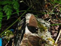 コジャノメ - 飛騨山脈の自然