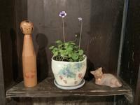 花を楽しむ器たち〜3 - アオモジノキモチ