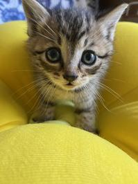 新しい猫家族 - うさぎ山工房 「うさぎ山の四季 」