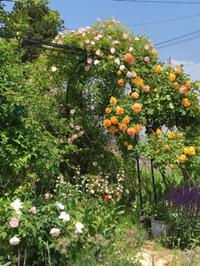 Garden、隠れオープン - rin時日報3