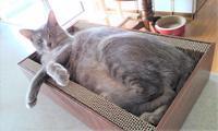 猫の爪とぎ段ボール - クロのこと・そして猫たちのこと~猫と共に老いを生きる~