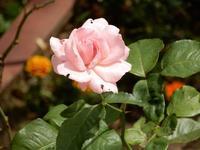 梅雨を迎える花々・・・ - 庭を眺めて…コーヒータイム