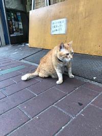 看板ネコと週末看板犬 - Mamamayumi26's Blog