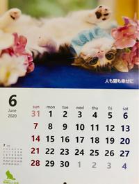 6月も6日目 - 猫多摩散歩日記 2