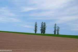 マイルドセブンの丘の景色と、vol.3~5月の美瑛 -