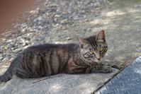 お寺のネコ様の近況 - 岳の父ちゃんの PhotoBlog