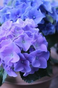 紫陽花の咲く家 - 一瞬をみつめて