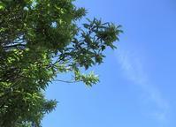 五月の青空と六月のスッキリ - 今日から明日へ・・・