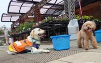 再開後初の土曜日(^_-)-☆ - 手柄山温室植物園ブログ 『山の上から花だより』