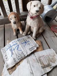 夕立ちリベラ犬 - スズキヨシカズ幻燈画室