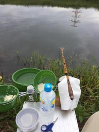 神崎川でへら鮒連荘です - ハタ坊(釣り・鳥撮・散歩)