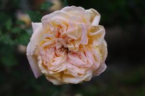 6.3開花 -