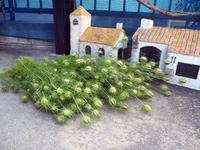 ニゲラや色々収穫しました。 - M's Factory