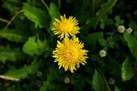 野の花エトセトラ - シンプル・ハウスワイフのRANDOM SHOT