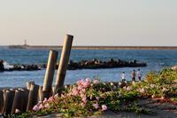 海岸物語 - 白鳥賛歌