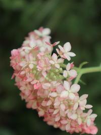 季節の花 - 毎日がばら色