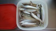 (山レポではありません)津市河芸漁港のキス釣り2020.06.4~5 - メガネぱぱの山歩き日記