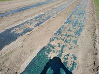 陸稲定植 - 長福ファームのブログ