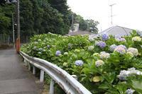 あじさいの咲くお寺へ【1】 - 写真の記憶