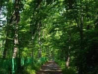 西武池袋線沿いの雑木林と北秋津 - ひのきよ