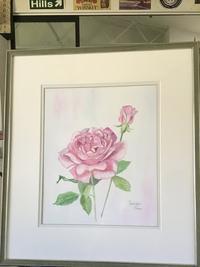 透明水彩でバラを描くRose for Youまだ名前のついていないバラ - バラのある幸せな暮らし研究所