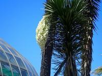 キラキラの緑色 - 手柄山温室植物園ブログ 『山の上から花だより』