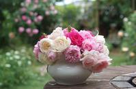 雨が降りメアリーローズがかなり散った日のバラ投げ入れ(5月16日)♪ - Reon with LR & Roses