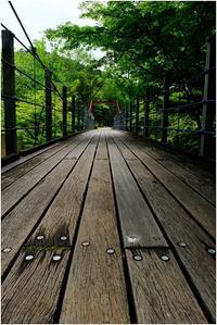 新緑の吊橋 - HIGEMASA's Moody Photo