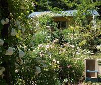 open garden - Fabulous days*
