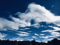 マグリットの空‼️ - 富士のふもとの農業日誌