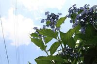 あじさいの咲くお寺へ【3】 - 写真の記憶