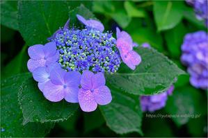 summer purple - りゅう太のあしあと