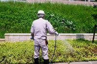 富貴草だと教えてくれた造園業者と池の清掃 - 照片画廊
