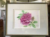 透明水彩でバラを描くRose for Youハーモニクス - バラのある幸せな暮らし研究所