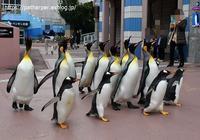 2020年1月白浜パンダ見隊その38 ペンギンパレード - ハープの徒然草