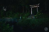 大谷川ホタル2020 - びっと飴