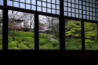 2020桜咲く京都 光明院・春景 - 花景色-K.W.C. PhotoBlog