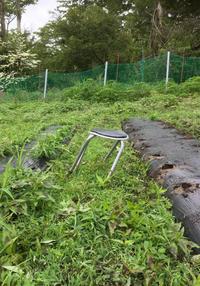 とうもろこし畑の怪‼️ - 富士のふもとの農業日誌