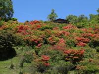 赤城山 見晴山(1) (2020/6/8撮影) - toshiさんのお気楽ブログ