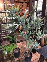 パールアカシア -  Flower and cafe 花空間 ivory (アイボリー)