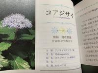 フラワーエッセンス小紫陽花 - マミーの伝言